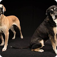 Adopt A Pet :: Daisy and Spike - Enfield, CT