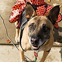 Photo 1 - Australian Cattle Dog/Shepherd (Unknown Type) Mix Dog for adoption in Youngstown, Ohio - Lucy - Sanctuary Dog