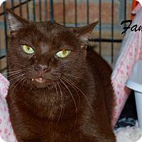 Adopt A Pet :: Fang - Daleville, AL