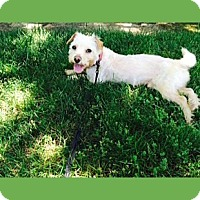 Adopt A Pet :: Sammy - Oakland, CA