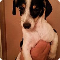 Adopt A Pet :: Bayonet - Tucson, AZ