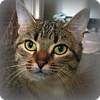 Adopt A Pet :: Hazelle Hawthorne - Mississauga, Ontario, ON