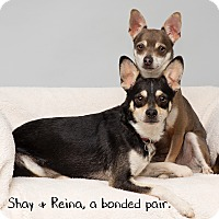 Adopt A Pet :: Shay and Reina - Westfield, NY
