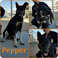 Adopt A Pet :: Pepper + 4 pups - California City, CA