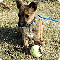 Adopt A Pet :: Vicky - Lawrenceburg, TN