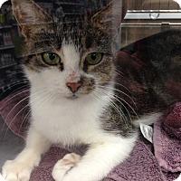 Adopt A Pet :: Neela - Hendersonville, NC