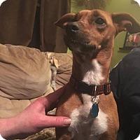 Adopt A Pet :: Lacy - Laingsburg, MI