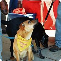 Adopt A Pet :: Matt - Rockville, MD