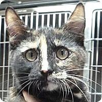 Adopt A Pet :: Tallulah - St. Petersburg, FL