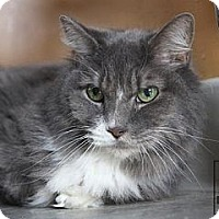 Adopt A Pet :: Timmy - Lancaster, MA