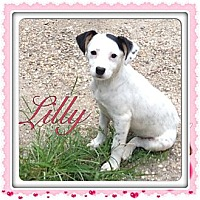Adopt A Pet :: Lilly - Marlton, NJ