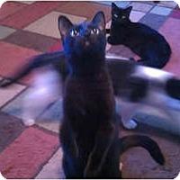 Adopt A Pet :: Cid - Laguna Woods, CA