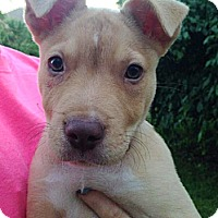 Adopt A Pet :: Seamus - North Olmsted, OH