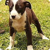 Adopt A Pet :: Blake - Staunton, VA