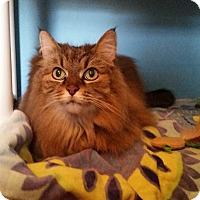 Adopt A Pet :: Snuggles - Ocala, FL