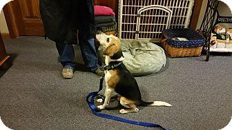 Sinking Spring Pa Beagle Meet Hunter A Dog For Adoption