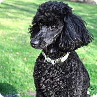 Adopt A Pet :: FRITZ - Elk River, MN