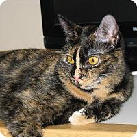 Adopt A Pet :: Romeo & Juliette - Worcester, MA
