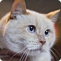 Adopt A Pet :: Phoenix - Lincoln, NE