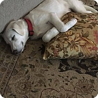 Adopt A Pet :: Olaf - BIRMINGHAM, AL