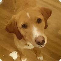 Adopt A Pet :: Sandy - Richmond, VA