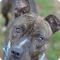 Adopt A Pet :: RUSS - Philadelphia, PA