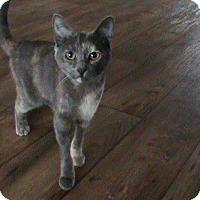 Adopt A Pet :: Tinkerbell - Nuevo, CA
