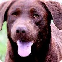 Adopt A Pet :: DALLAS(A TRUE