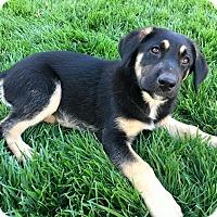 Adopt A Pet :: Lana Turner - Dayton, OH
