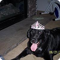 Adopt A Pet :: Penny - Coldwater, MI
