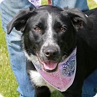 Adopt A Pet :: Bella - Garfield Heights, OH