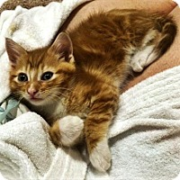 Adopt A Pet :: Timothy - Fort Collins, CO