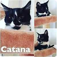 Adopt A Pet :: Catana - St Clair Shores, MI