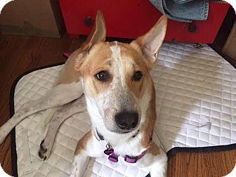 Hound (Unknown Type) Dog for adoption in Monroe, New Jersey - Taj *URGENT*