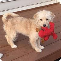 Adopt A Pet :: Nala - Potomac, MD