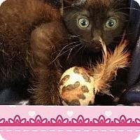 Adopt A Pet :: Piper - Mansfield, TX