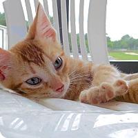 Adopt A Pet :: Sammy - St. Francisville, LA