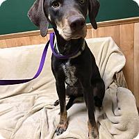 Adopt A Pet :: Cocoa - Maryville, MO