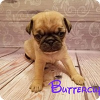 Adopt A Pet :: Buttercup - Rathdrum, ID