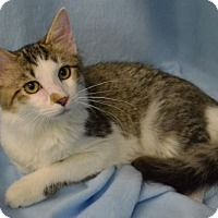 Adopt A Pet :: Bruce - Morgantown, WV