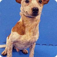 Adopt A Pet :: Larry - Channahon, IL