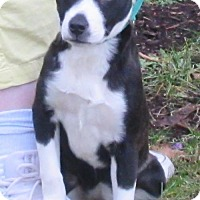 Adopt A Pet :: Mona - Elkins, WV