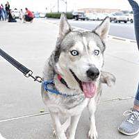 Adopt A Pet :: ALASKA - Powder Springs, GA