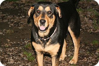 Rottweiler Mix Dog for adoption in Linton, Indiana - Jasmine