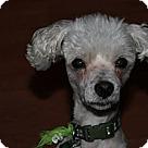 Adopt A Pet :: Newman