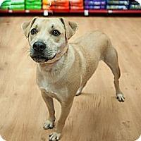 Adopt A Pet :: Speedy - Birmingham, MI
