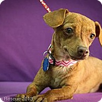 Adopt A Pet :: Sparkle - Broomfield, CO