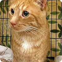 Adopt A Pet :: Jackson - West Dundee, IL