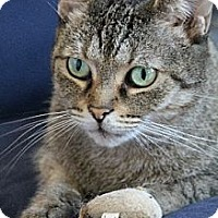Adopt A Pet :: Kitty Roo - Chicago, IL