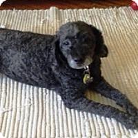 Adopt A Pet :: Frankie - Framingham, MA